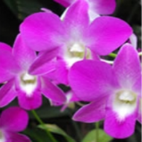 daniel-stowe-botanical-garden-nc-gardens-and-arboretums