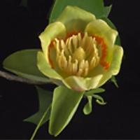 william-lanier-hunt-arboretum-garden-and-arboretum-nc
