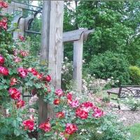 greensboro-arboretum-nc-garden-and-arboretum