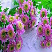 nectar-_florists_in_north_carolina